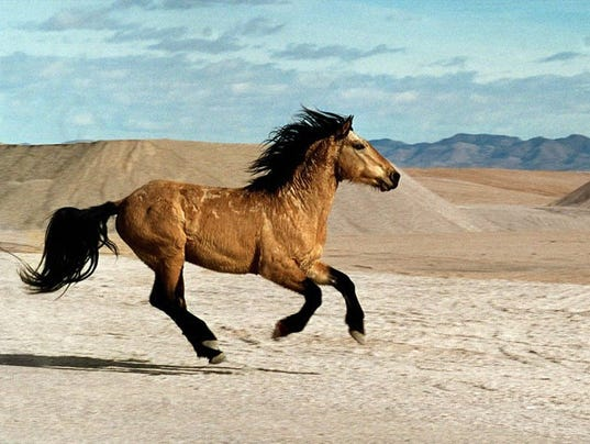 9th Circuit Denies Nevada Wild Horse Appeal