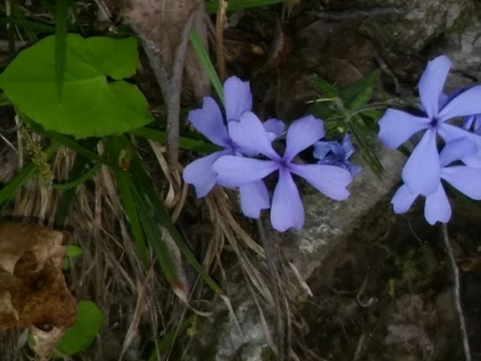 Certain parts of the trail have wildflowers in the