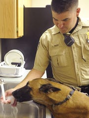 Lyon County Sheriff's Deputy Jonathan Tripp gives Karma a drink from a sink at the Dayton substation.