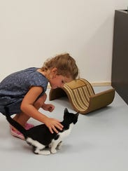 A girl plays with a cat at the Fat Cat Cafe Tallahassee