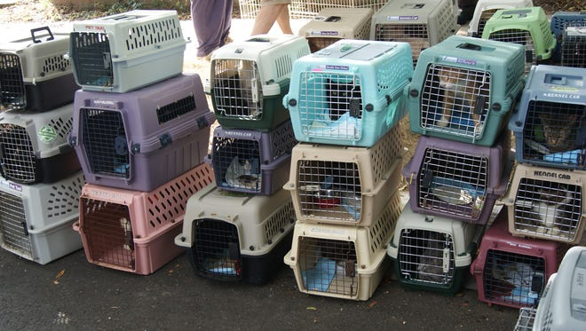 Boxes containing 84 cats seized from a Royal Oak house by police on Tuesday, Sept. 29, 2015, await transport to the Oakland County animal shelter in Auburn Hills.