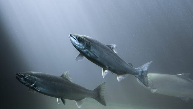 A federal appeals court upheld a 2009 federal decision that called for reducing the amount of water pumped from the Sacramento-San Joaquin delta in order to protect salmon and other species.