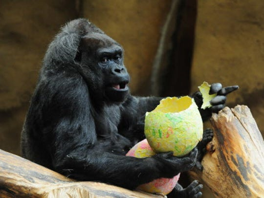 Egg Day isn't just for human guests at the Milwaukee County Zoo.
