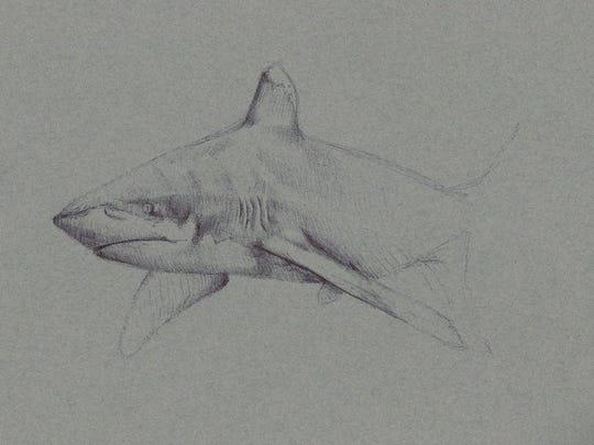 """White Tip Reef Shark"" is by artist Amanda Coates,"