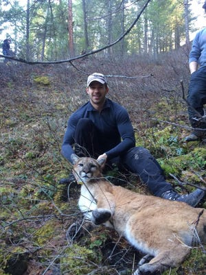 Patrick Stent, a wildlife biologist with the Fish and Wildlife Branch of the Ministry of Forests, Lands and Natural Resource Operations in British Columbia, holds a sedated mountain lion in March 2015 that was fitted with a GPS collar near Cranbrook in British Columbia so its movements could be monitored. The cat, which traveled to the Big Belt Mountains east of Helena, was legally harvested by a hunter Dec. 11, according to Montana Fish, Wildlife and Parks.