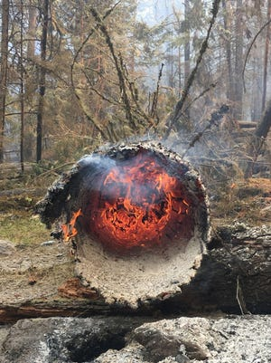A tree burned by the Howe Ridge fire in Glacier National Park.