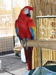 A parrot greets visitors to the ribbon-cutting at Monsoon Lagoon this week.