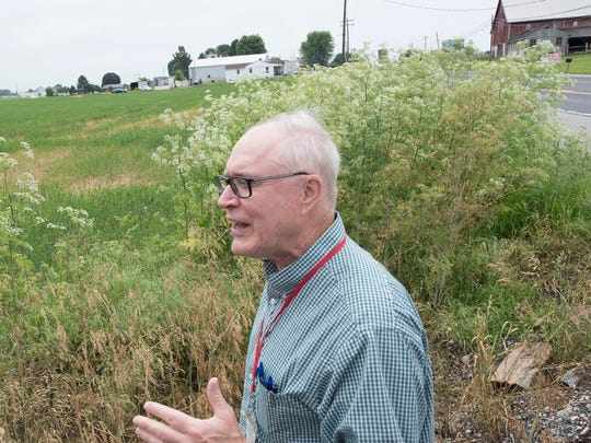 Bob Thomas, Franklin County Commissioner, talks about poison hemlock. Poison hemlock grows wild along the side of the road in the 4000 block of Molly Pitcher Highway, Marion. Conium maculatum, or poison hemlock, is a highly poisonous flowering plant in the carrot family.