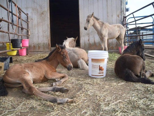 Kidznhorses Outreach in Selah, Wash., rescues more