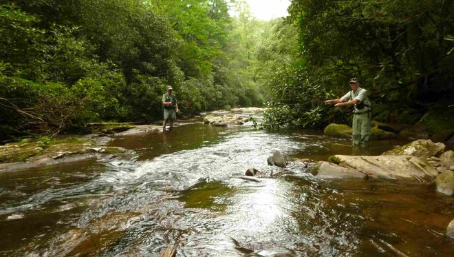 The Carolina Mountain Land Conservancy worked to secure access to the North Fork of the Mills River, a prized trout stream. The land surrounding the river is now part of Pisgah National Forest.