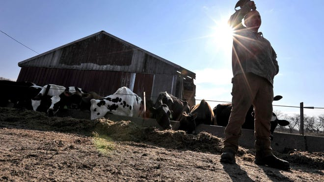 "Pine Hill Dairy farm owner Andrew Ferry discusses the struggles of dairy farming in this file photo from April. A ruling on the town's Right to Farm revamped bylaw may ""be the death of farming,"" according to bylaw petitioner Sherilyn Mahoney."