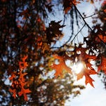 OPINION: The story of trees, and why some drop their leaves