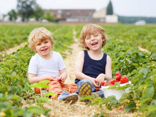 Two little sibling boys having fun on strawberry farm