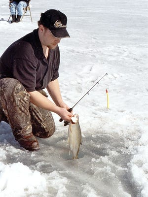 Angler Don Dittburner of Otsego pulls a tulibee from a hole on Leech Lake during a fishing excursion.