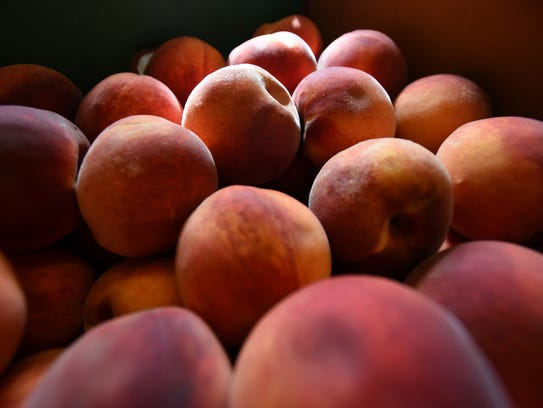 Peaches glow in the morning light at Siegrist Orchard