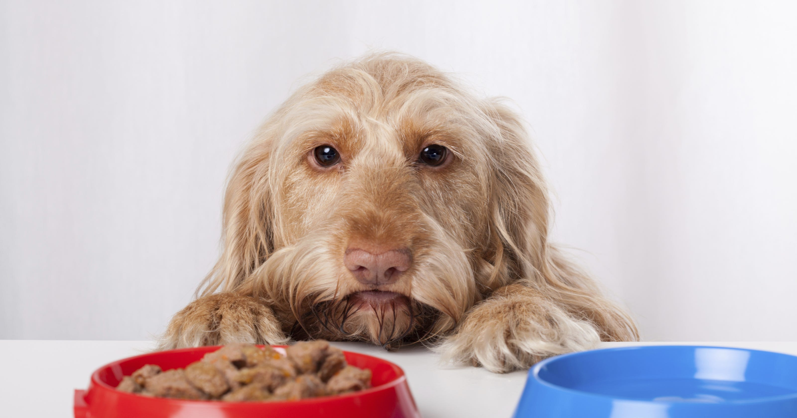 1d6249a03f 4 dog food companies issue recall over salmonella fears