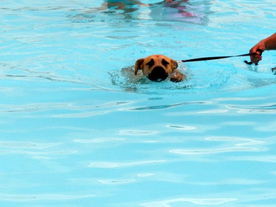 Smiley from the UC Dog Pound taking a swim.