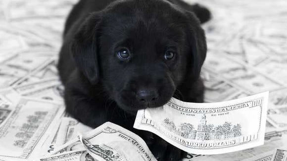 A black puppy lays in a pile of money with a hundred dollar bill in his mouth.