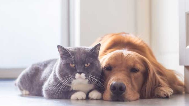 A bipartisan bill passed by the House this week would outlaw the slaughter of dogs and cats for food in the United States.