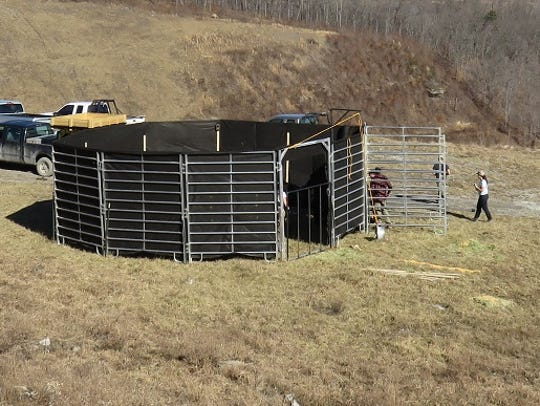 28 elk have been captured in Tennessee and likely will