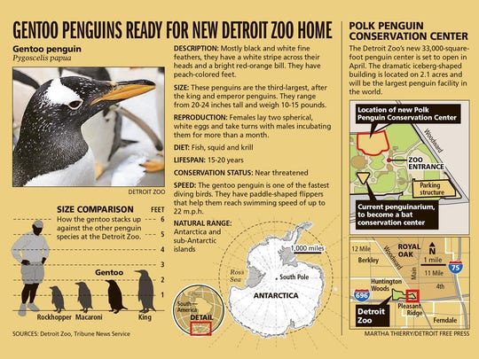 Gentoo penguins ready for new Detroit Zoo home