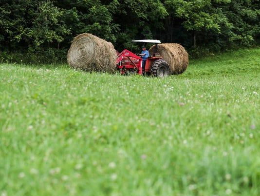 636663934510229700-Cattle-Farmer-Rollin-Bach-battling-black-vultures-7-.jpg