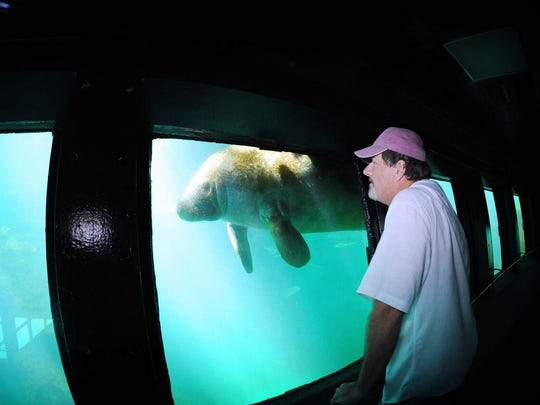 "Manatees can be viewed at the ""fishbowl,"" and underwater"