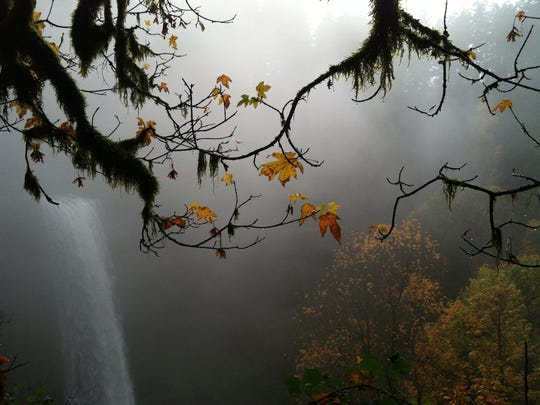 More than 1 million people visit Oregon's Silver Falls State Park every year, but head there in the fall or winter, and you're likely to have the park to yourself.
