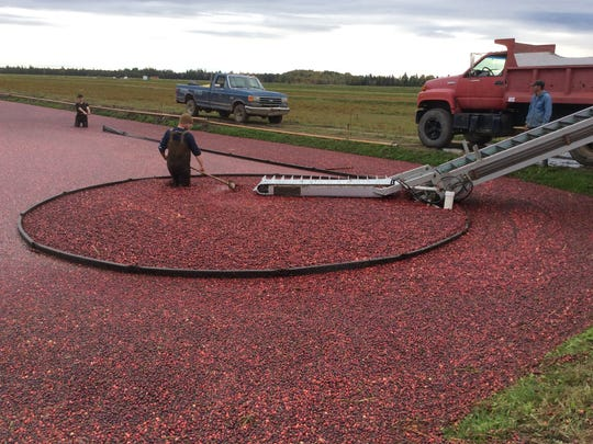 Wisconsin cranberry growers may have to reduce sales if the U.S. Department of Agriculture's federal market order is approved.