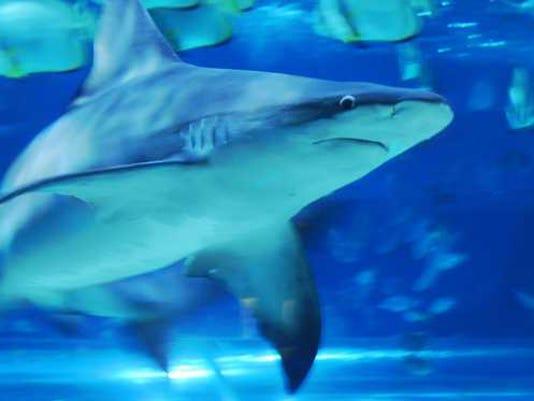 Shark.e3f61972.fill-800x373.jpegquality-50.jpg