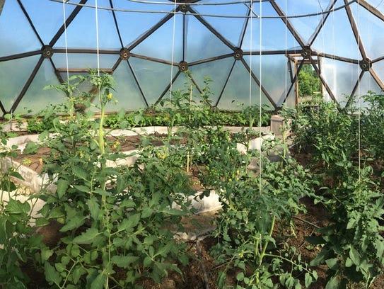 Health By Plants, a new Waushara County natural farm