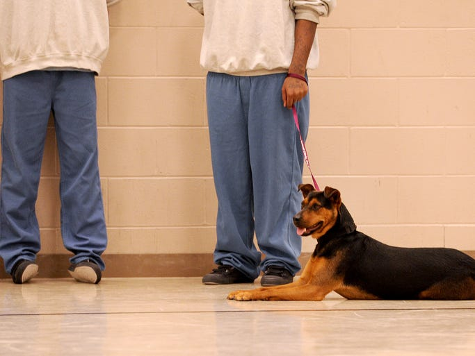 Jackie, a dog from Indianapolis Animal Care and Control, lies at the feet of a pair of young men inside the Marion County Juvenile Detention Center, Tuesday, January 21, 2014, in Indianapolis.