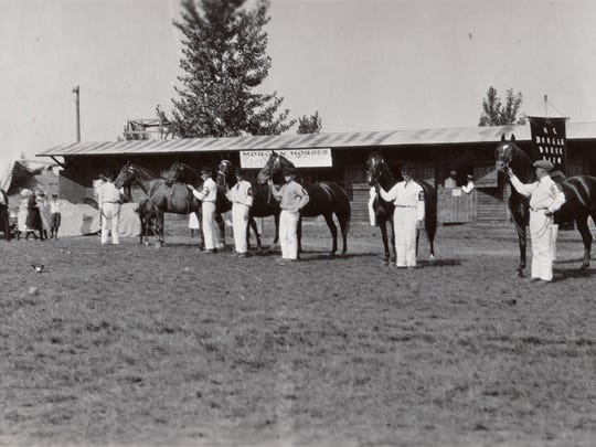 U.S. Morgan Horse Farm horses preparing for a show. Date unknown.