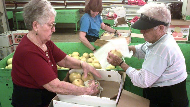 Sisters Carolina Policicchio, left, and Josephine Ramshur, right, are seen wrapping navels and ruby red grapefruit at Policicchio Groves on Merritt Island in this 1999 file photo. Ramshur died on May 31, the last of the pioneering citrus industry siblings in the Crisafulli family. Policicchio died in 2012.