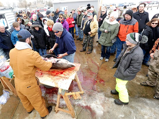 A crowd gathers to watch a sturgeon get processed at