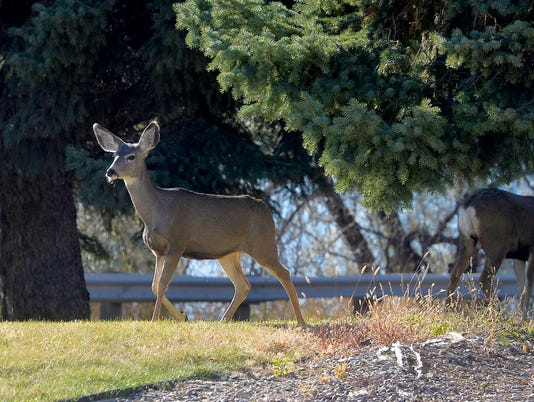 636449648194917272-10262017-Deer-at-Tribune-A.jpg