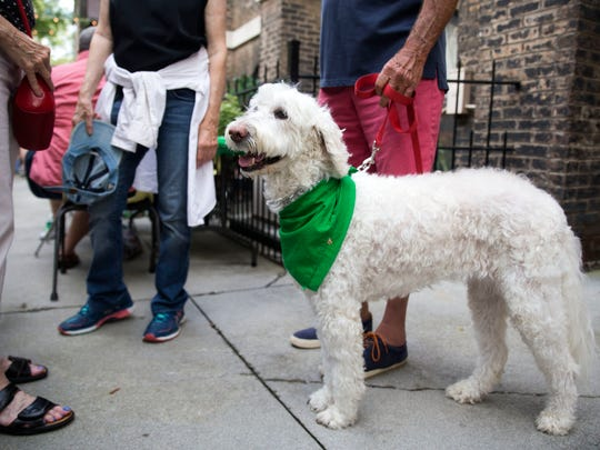 Carmella the dog wears a festive green bandana at the