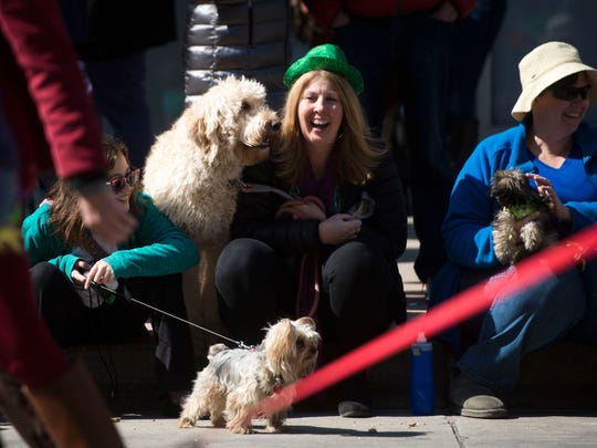 Donna Tisdale of Lenoir city laughs with her dog Boo as they watch dogs and their owners walk down Gay Street as part of Young-Williams Animal Center's 10th annual pet parade Mardi Growl on Saturday, March 4, 2017.