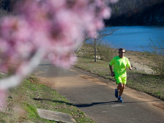 A man runs past a flowering tree along a greenway across from University of Tennessee's Veterinary School on Friday, Feb. 17, 2016.