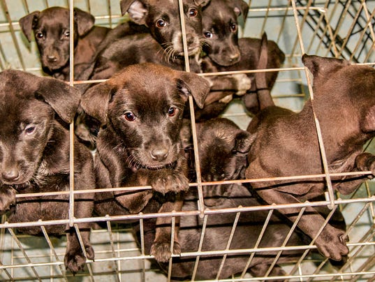 Litter of Puppies Dropped Off in Crate to Animal Shelter
