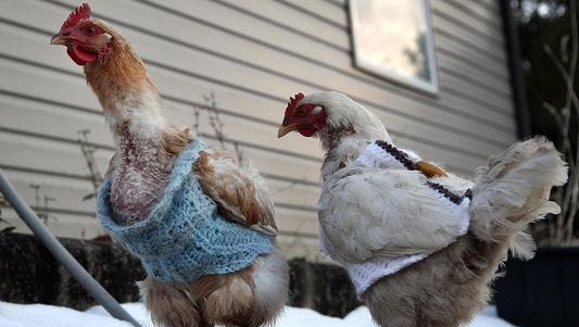 Barbara Georgoulianos of Sweetwater, Mullica Township, and her granddaughter Layla Merkh, 10, of Galloway, crocheted sweaters for Georgoulianos' chickens after a dominant one began pecking the feathers off of the others.