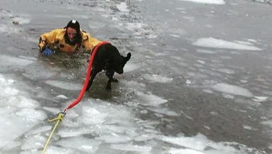 A photo from a tweet showing the rescue of a dog, Betsy, that fell through the ice.