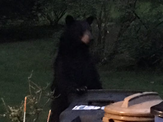 A bear was spotted in backyards along Maryland Avenue