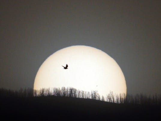 raven-wth-sun.jpg