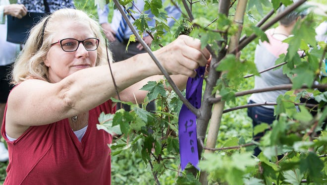 Carma Lump, one of the nurses who took care of cystic fibrosis patients and sisters Leah Hollis and Jamie Mumaw, hangs a blue ribbon on a recently planted maple tree in Yoctangee Park on Wednesday, May 30, 2018, in remembrance of the sisters she helped take care of who passed away recently from the disease.