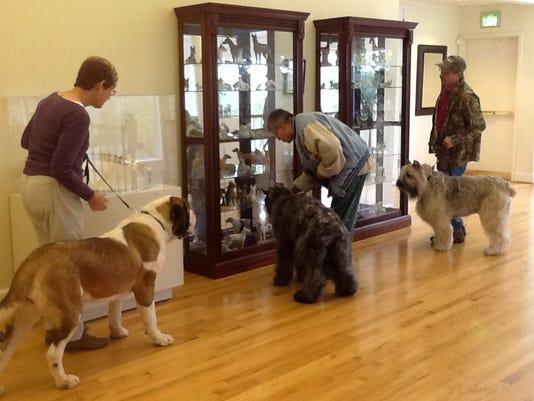 Travel-Trip-Dog Museum (2)