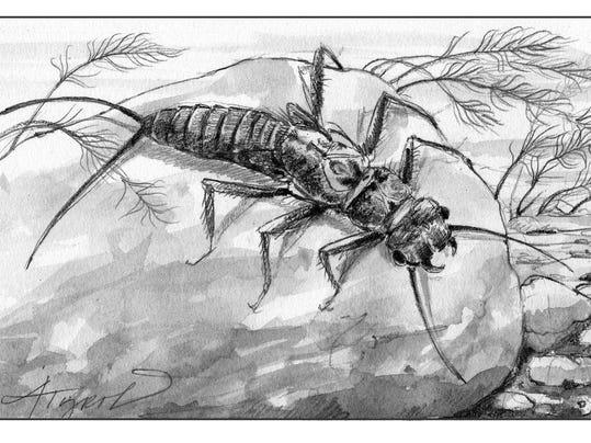 TOS_Aquatic_insects