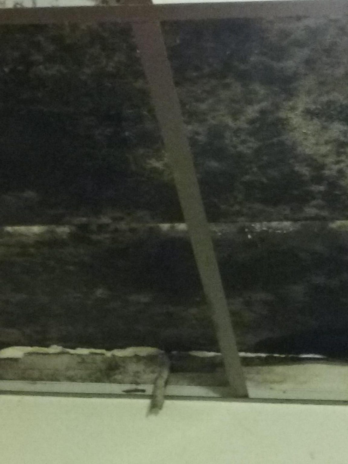Mold visible on the ceiling of Jashauna Creadle's bedroom