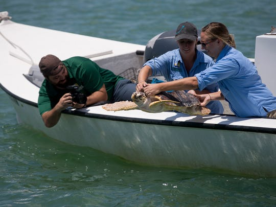 Conservancy of Southwest Florida's Animal Care Naturalist Sam Arner, left, and Nature Center Programs Coordinator Katie Ferron release Luna, a two-year-old female loggerhead sea turtle into the Gulf of Mexico near the Ten Thousand Islands Thursday, April 26, 2018 just off the coast of Goodland, Fla.