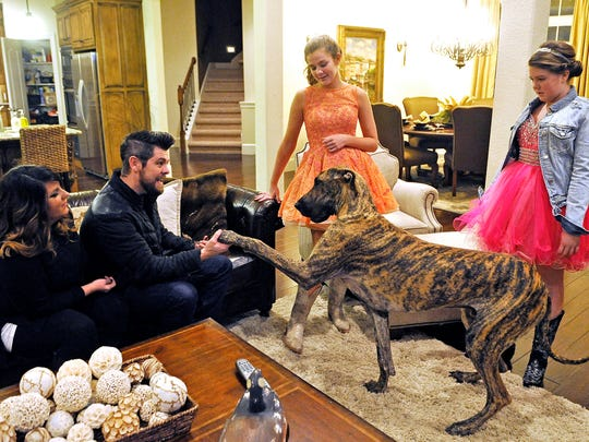 The Crabb family's Great Dane wants in on the excitement